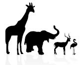 preview : 動物の影絵 : すべての講義